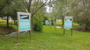 Fish in the Sava – info...
