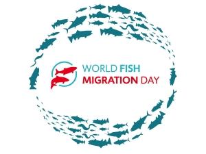 24. 10. 2020, Svetovni dan prehodnosti voda za ribe